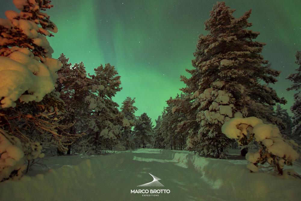 Os pinheiros completam o clima natalino na Laponia.Ótimo lugar para se ver a Aurora Boreal