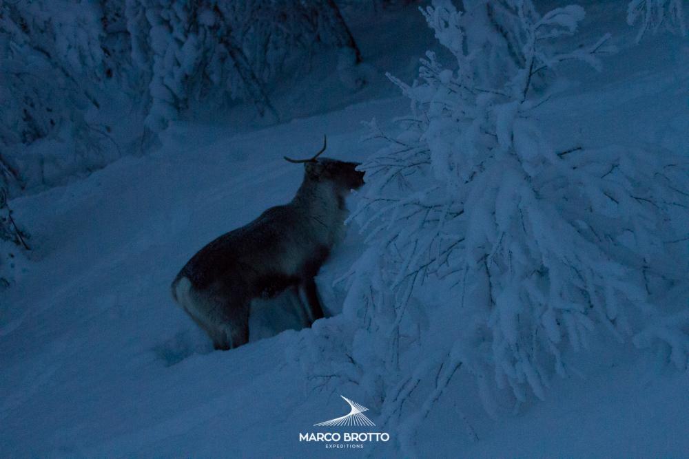 auror-boreal-noruega-finlandia-animais