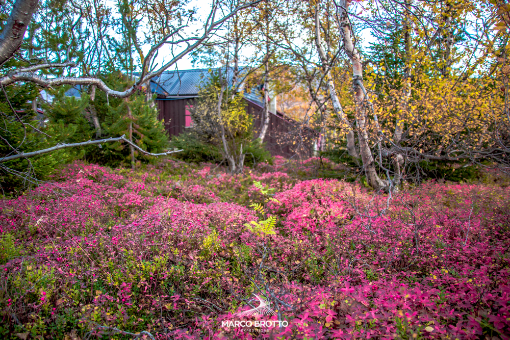 As flores de setembro na Escandinávia.