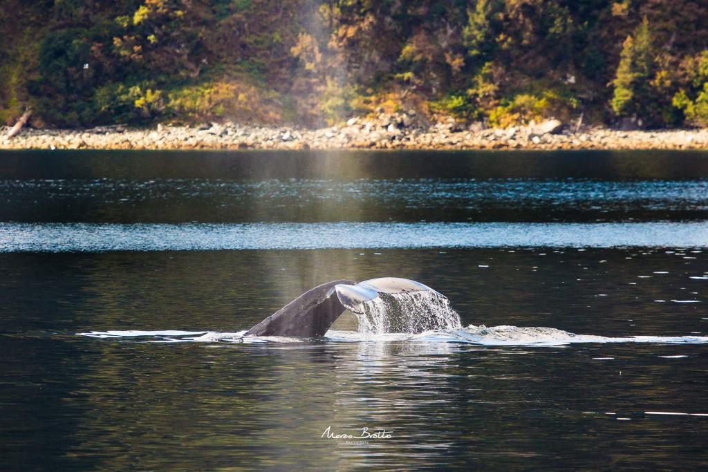 A sorte desse grupo é enorme, até baleias encontramos na nossa jornada pelo alasca.