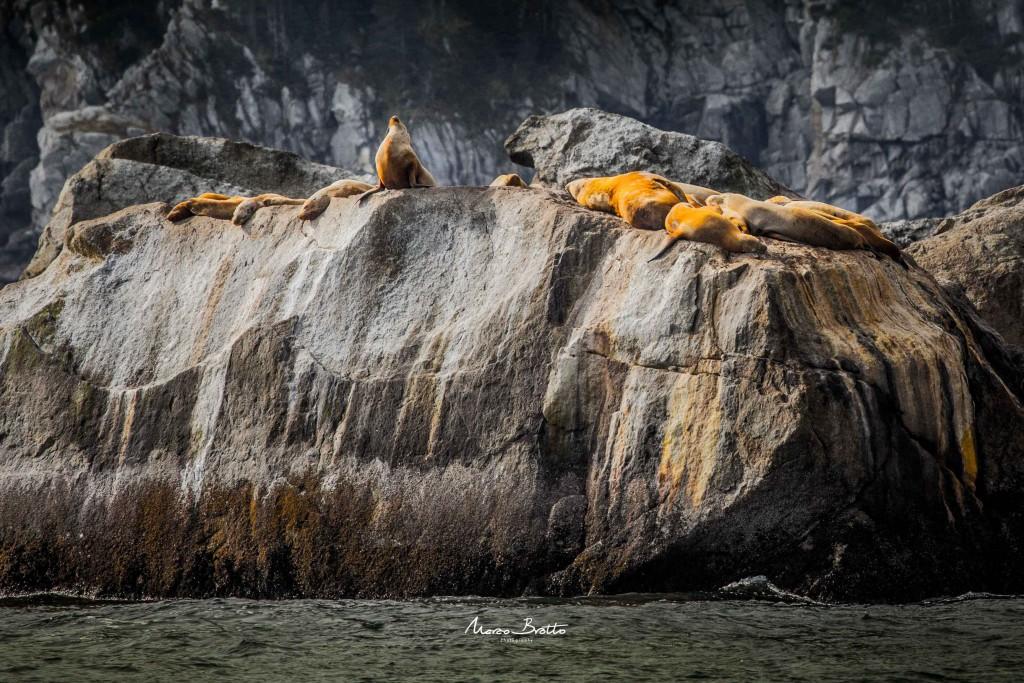 Fazendo posse para fotos, os leões marinhas são de uma simpatia incrível.