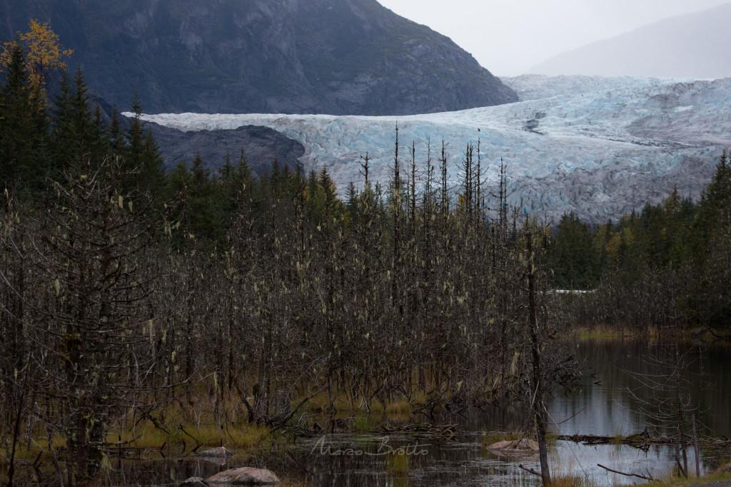 A vista do Glacial já é espetacular a uma distancia enorme da entrada do lago.