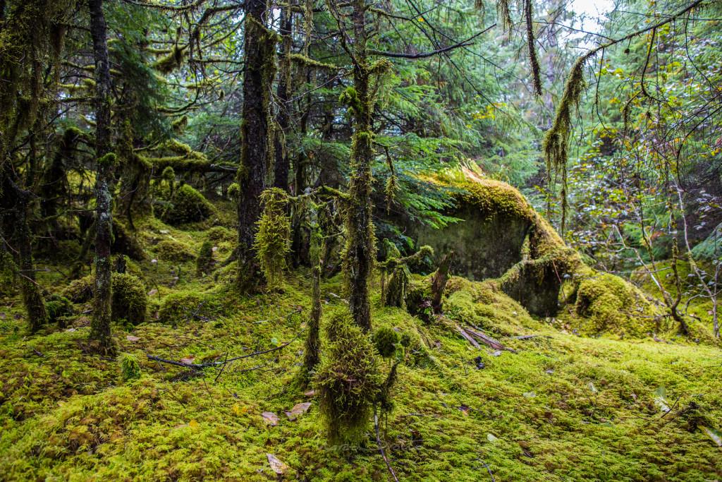 A vegetação perto dos glaciais é repleta de musgos , uma imagem de conto de fadas.