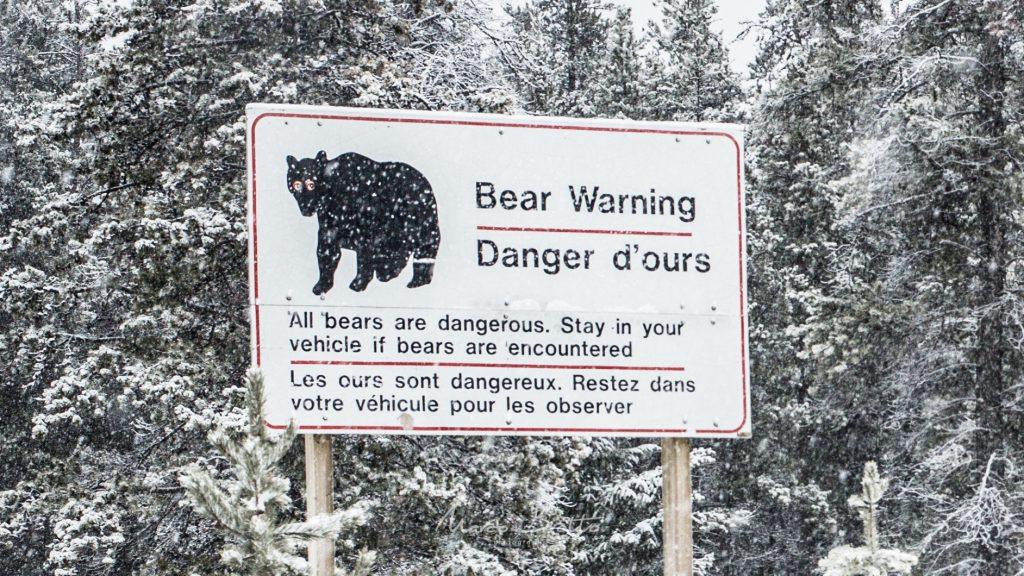 ursos e aurora boreal no Canadá
