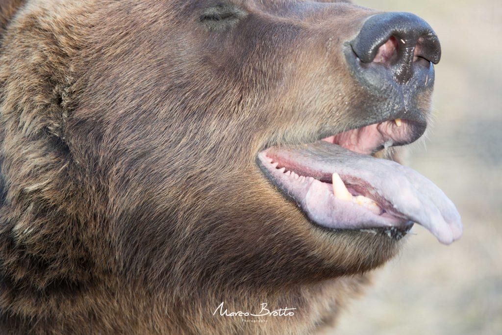 viagem-ao-alasca-vida-selvagem