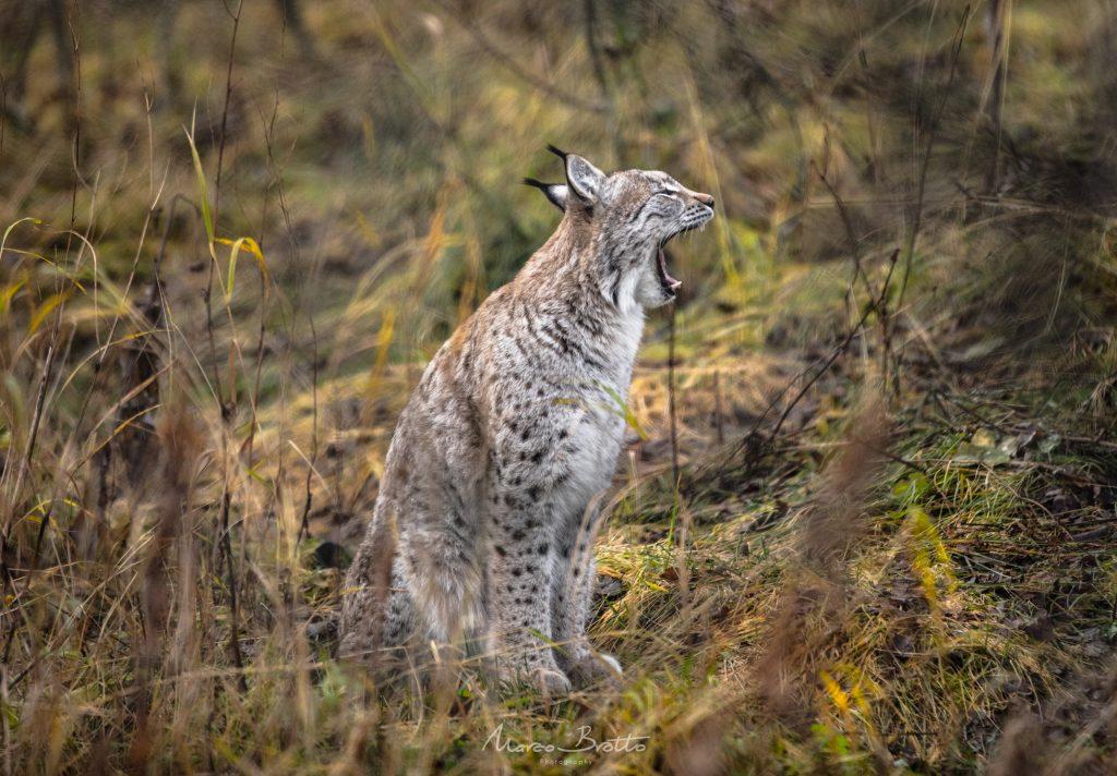 noruega viagem animais tromso selvagem