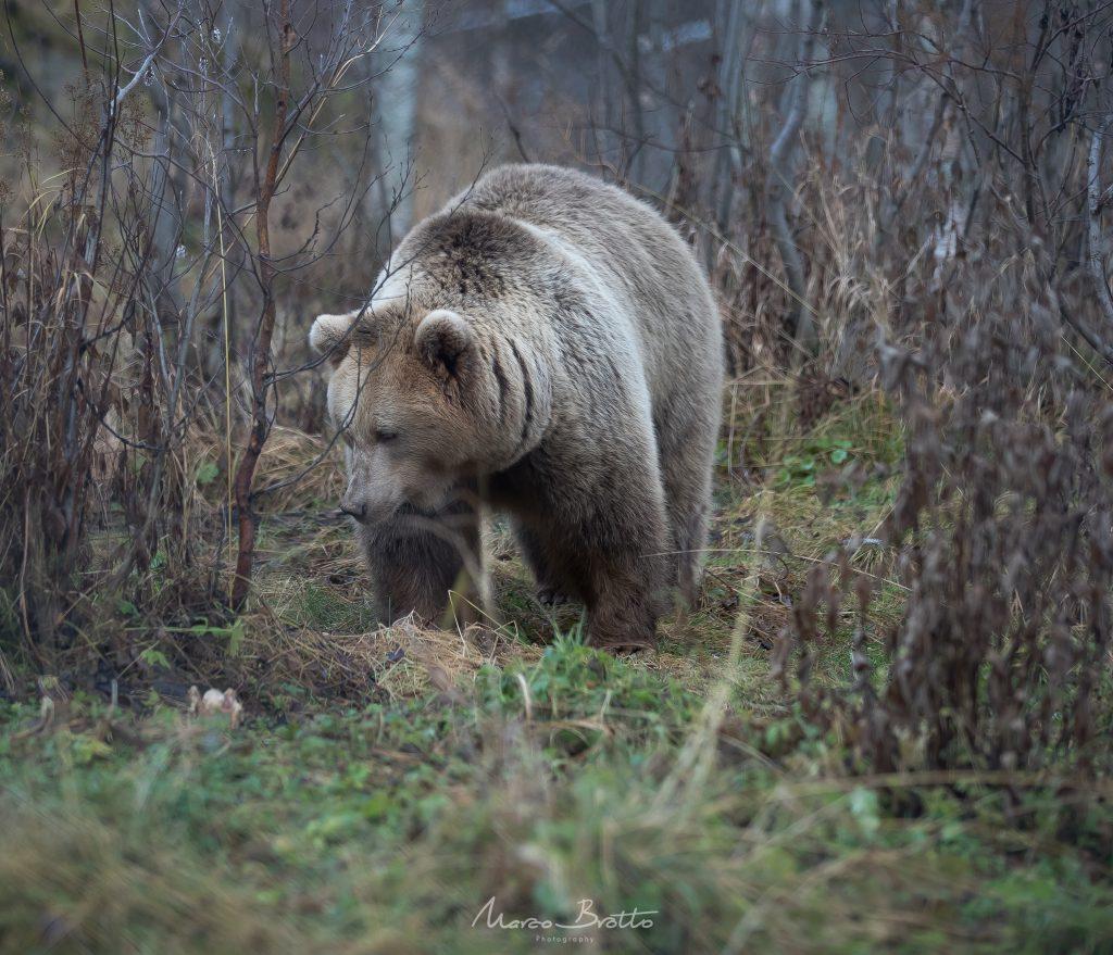 urso noruega viagem animais tromso