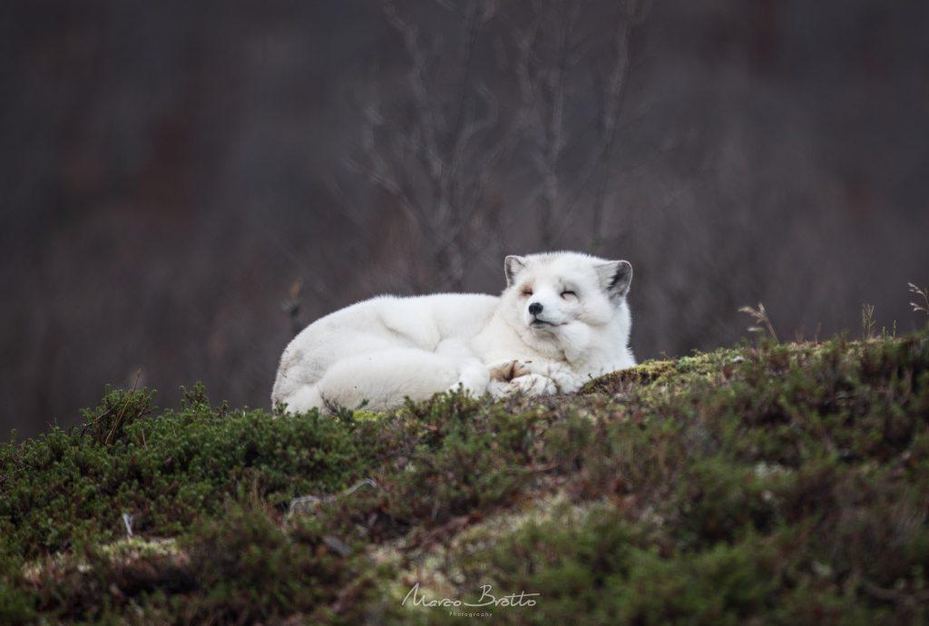 noruega viagem animais tromso