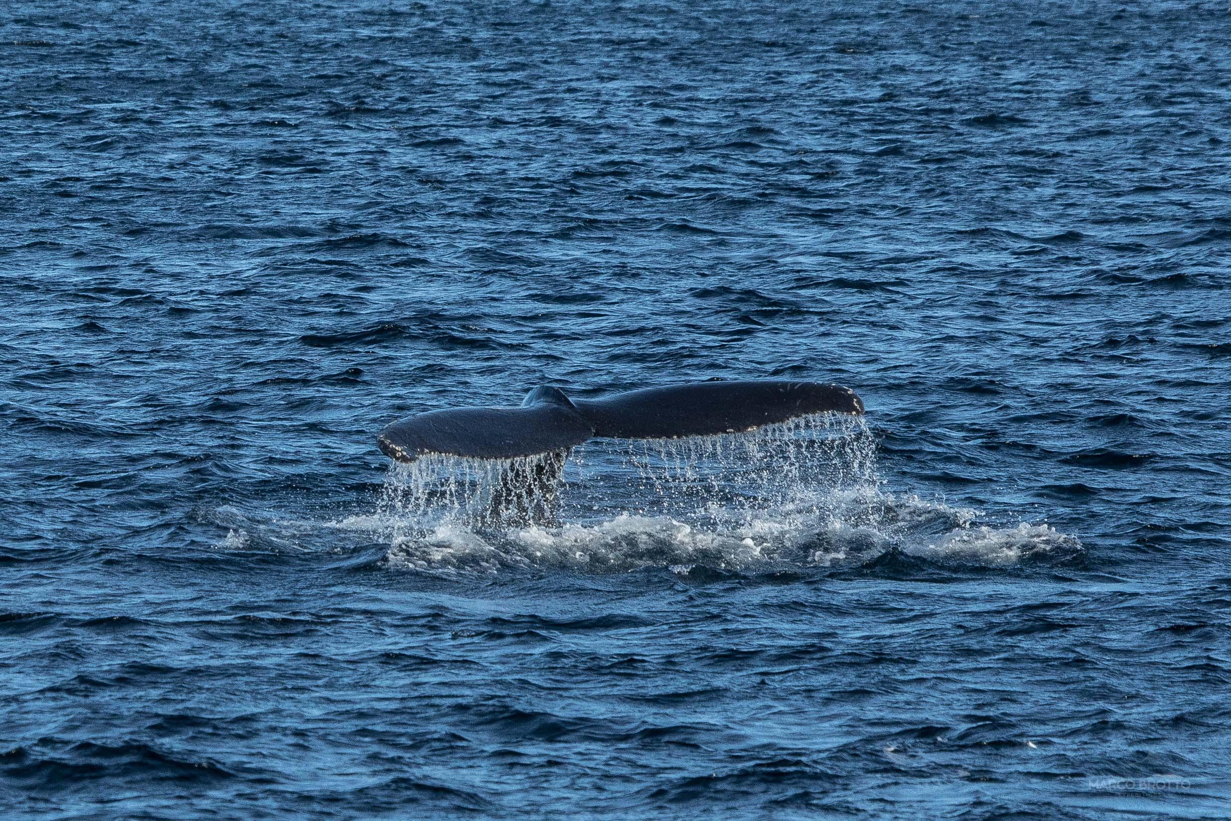 expedicao-pela-groenlandia-mar