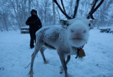 Lapônia: Noruega e Finlândia – Aurora Boreal, Paisagens & Cultura Sami