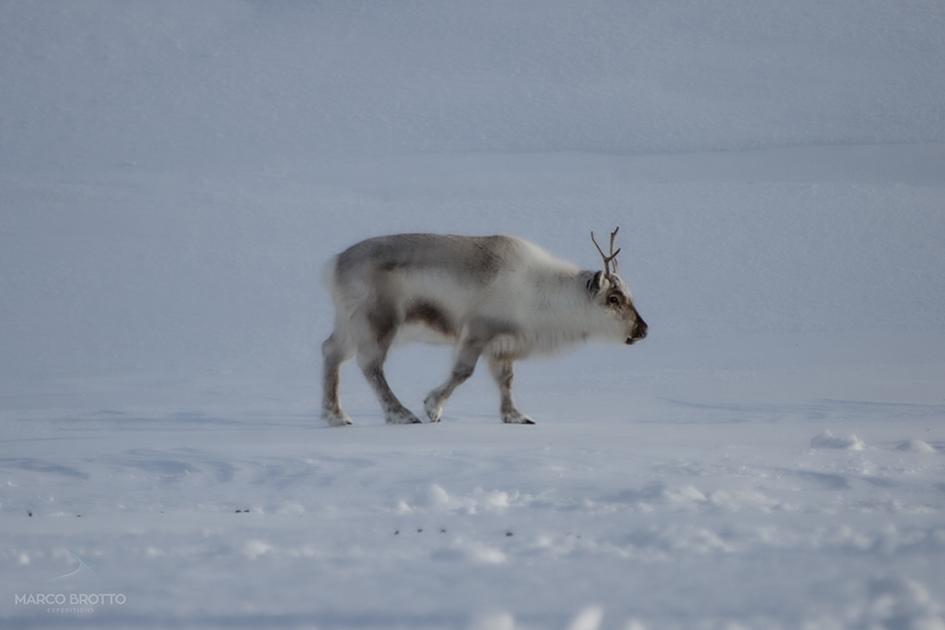 aurora-boreal-svalbard-06-16255