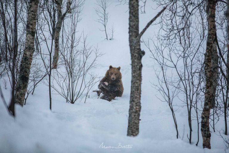 destinos-para-ver-neve-urso