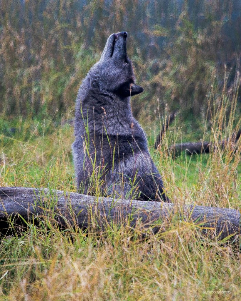 auora-boreal-paisagens-5-16083