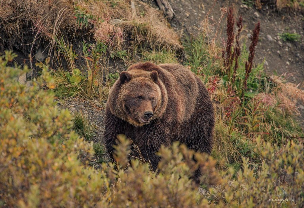 auora-boreal-paisagens-6-16082