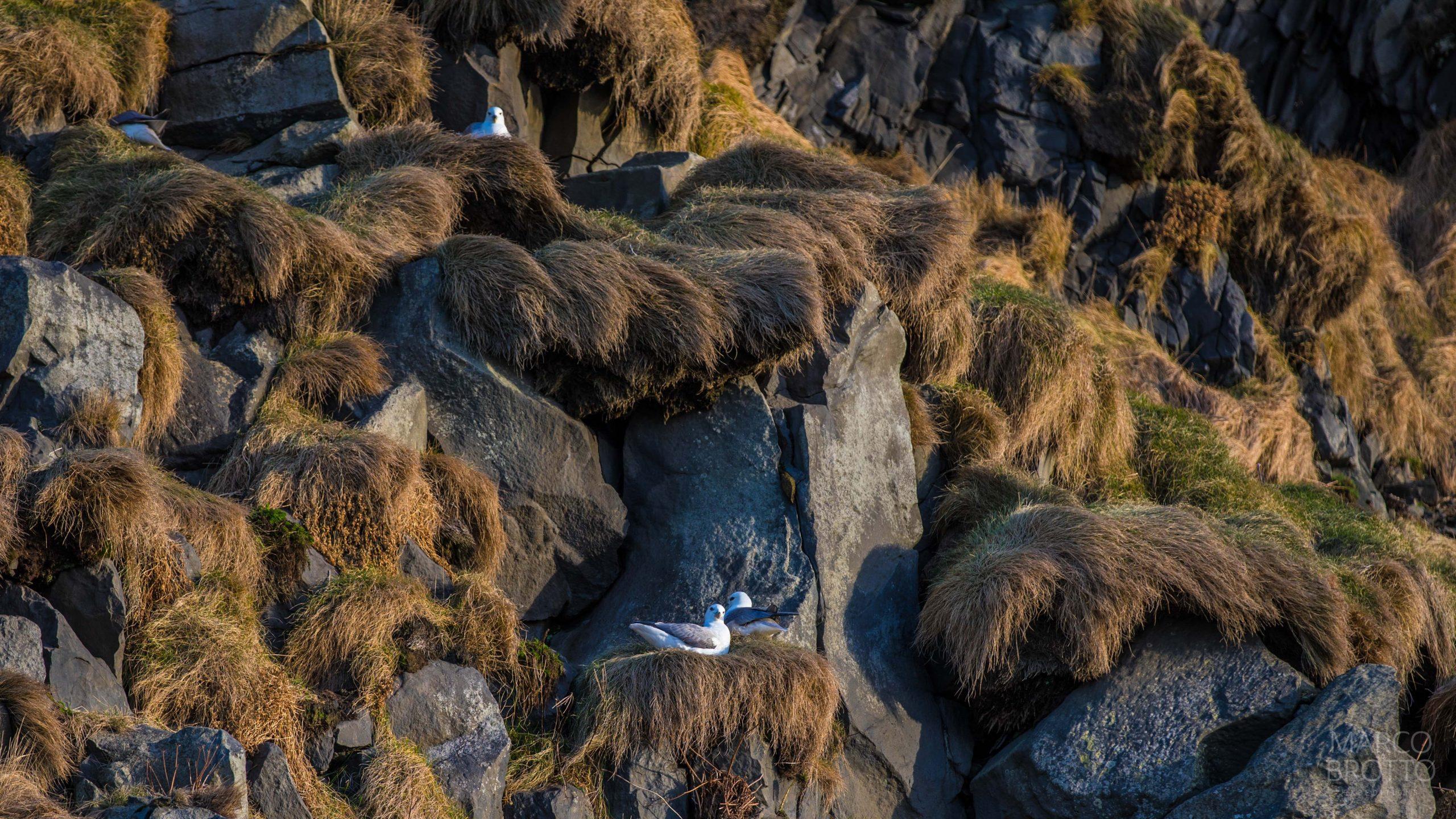 2018-01-25_ICELAND-2018-JAN-TRIGEMEOS-Canon-EOS-5D-Mark-IV31-51-16551