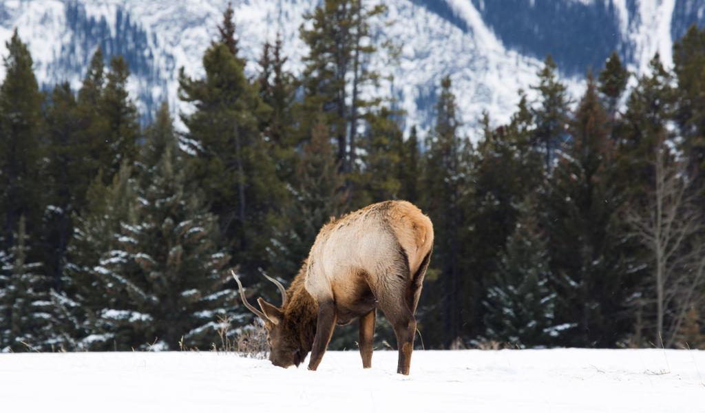 Turismo no Canadá: montanhas, neve e vida selvagem