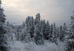 Floresta Boreal sob neve