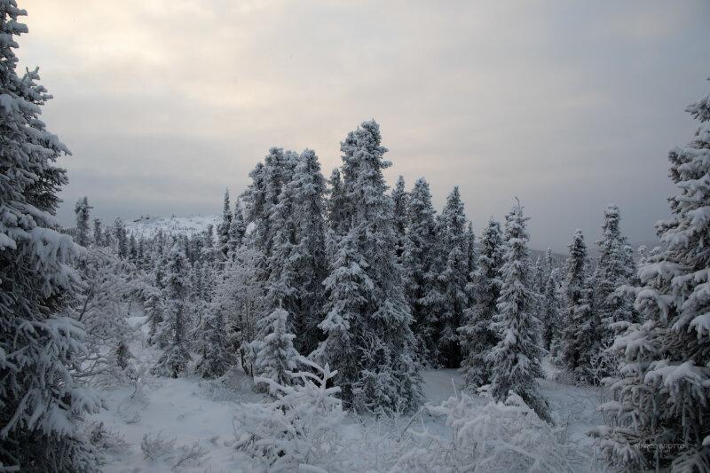 Você conhece a Floresta Boreal?